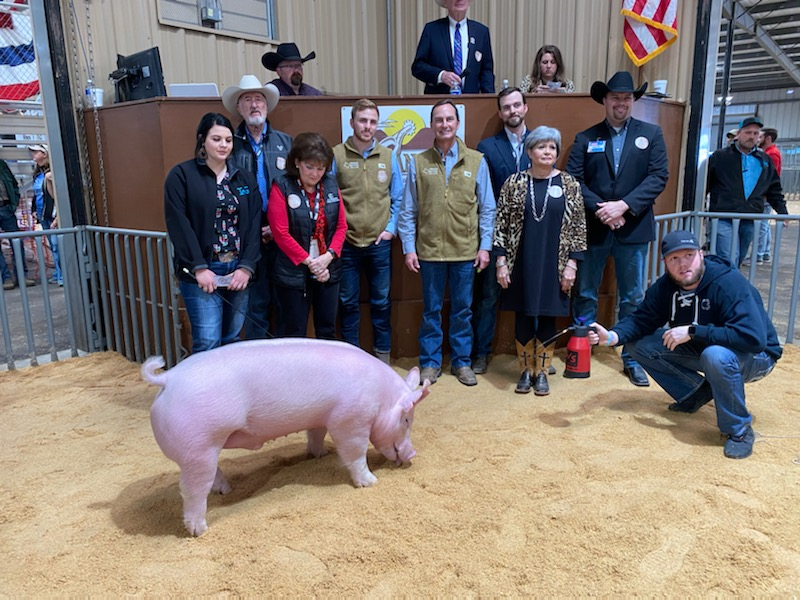 2020 Reserve Grand Champion Barrow by Cassie Atteberry/Collin Co. 4-H (LIVE! Photo/Yantis Green)