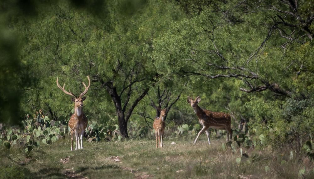 The main attraction to owning these properties is the availability of plentiful deer for hunting. (King Land & Water)
