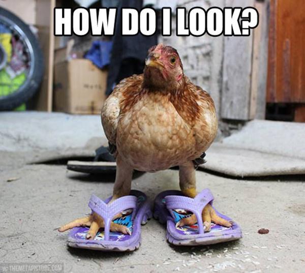 Adopt-A-Chicken