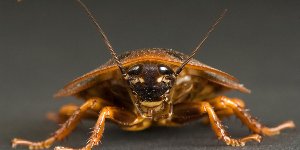 A service will name a roach after your ex. But the roach will be around a lot longer than the salmon, so your ex's namesake might actually outlive you. (Contributed/Kendal Hemphill)