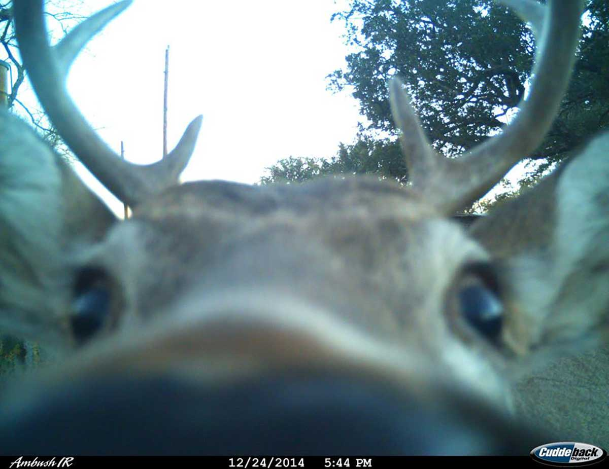 The nose of a deer - the full length photo. (Contributed/Kendal Hemphill)