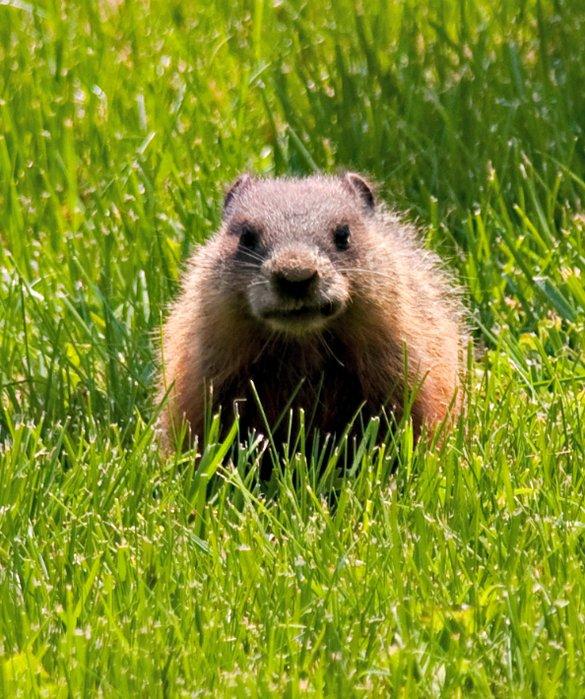 Groundhog Day photo K. Hemphill
