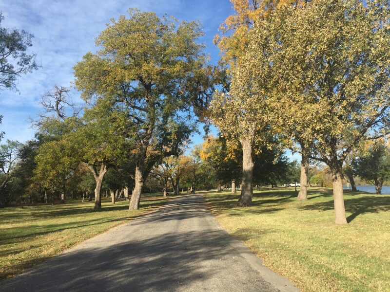 Pecan trees near the horseshoe bend area at Lake Nasworthy