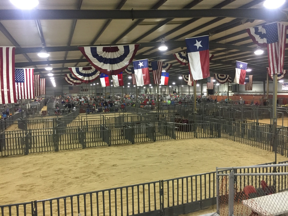 Show ring in the sale barn ready for swine shows.  Yantis Green photo.