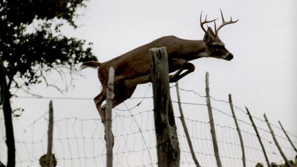Texas Parks & Wildlife Dept. Issues Emergency Order to Combat Deadly Deer Disease