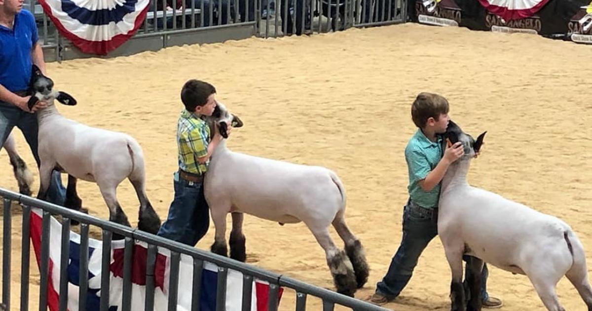 San Angelo Stock Show Junior Market Lamb Show Results