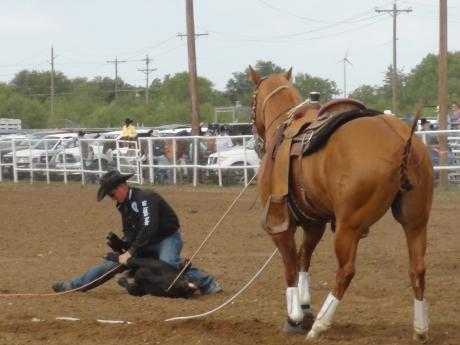 Roper ties the calf while the horse holds (LIVE! photo by Cheyenne Benson)