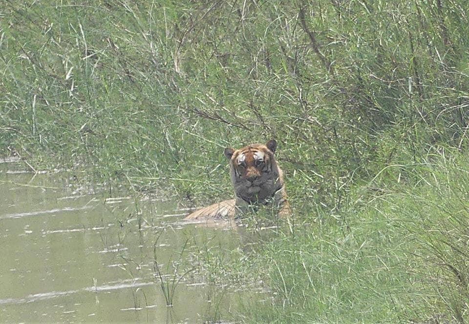 El Tiger Del Sur (Eagle Pass News Leader)