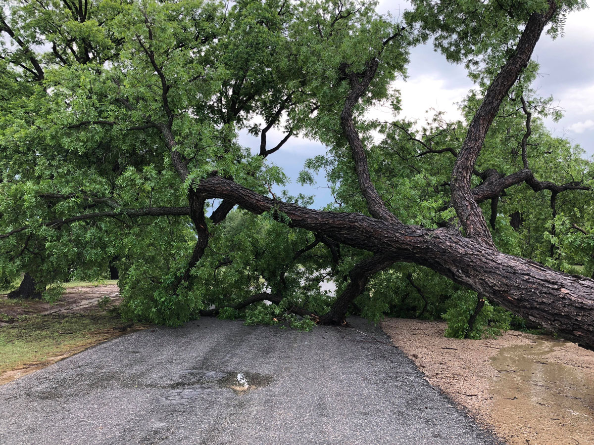 A tree downed by thunderstorms May 15, 2018 on Camper Road near Lake Nasworthy. (Contributed/Debra Brown)