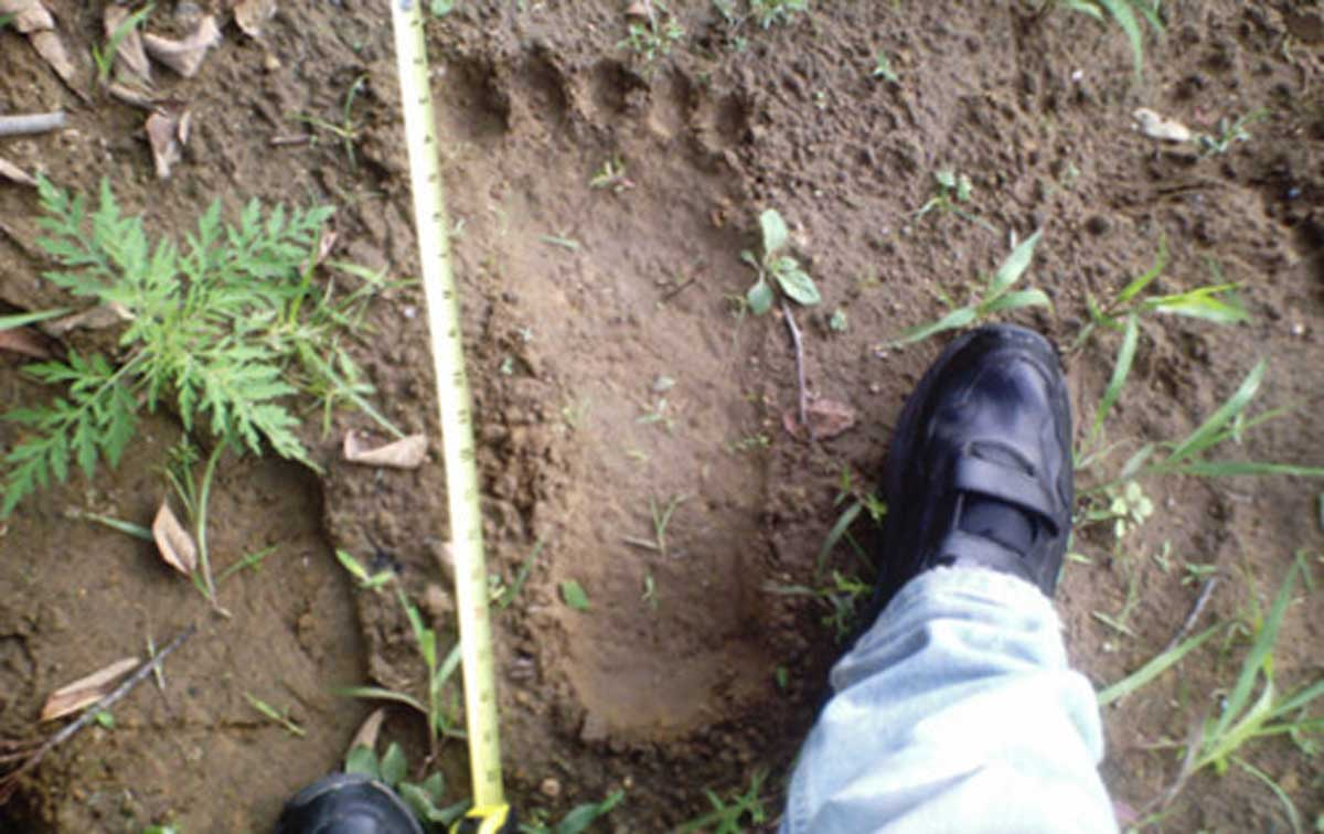 Bigfoot's foot print?